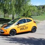Ford Folierung in Orange
